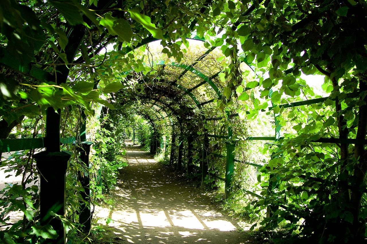 pergolat jardin